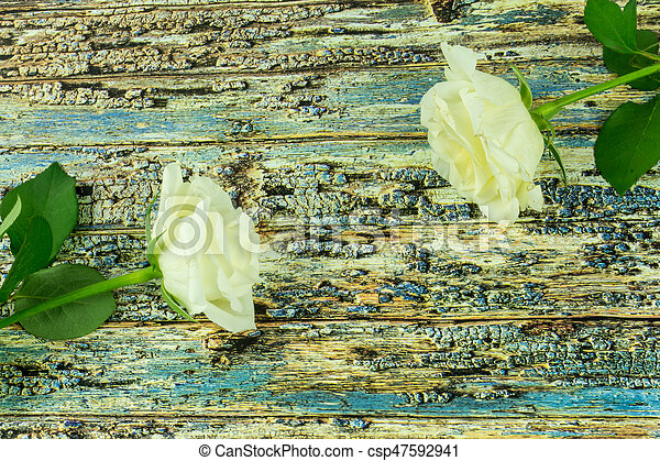 White roses on a colored wooden background - csp47592941