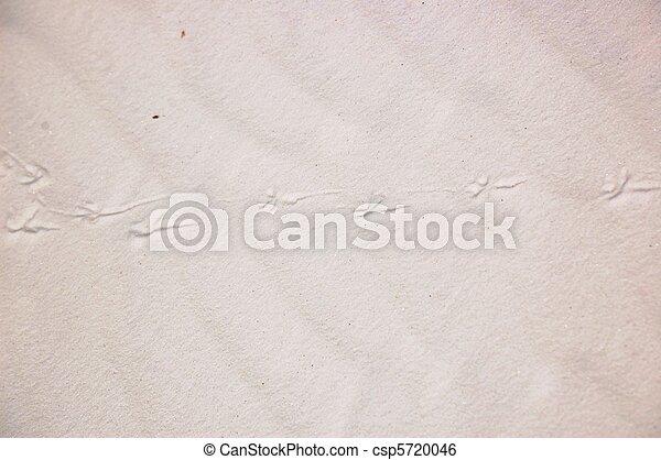 White Sands Animal Tracks - csp5720046