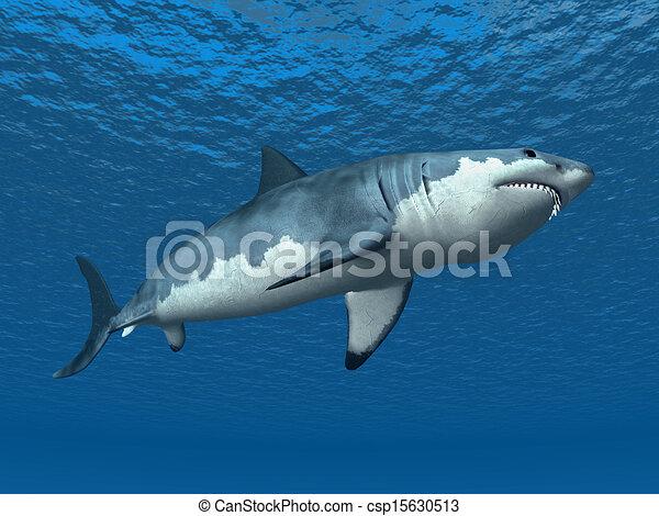 White Shark - csp15630513