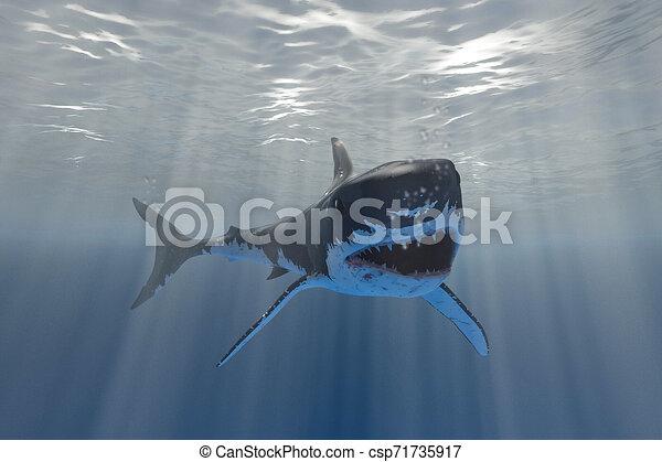 white shark - csp71735917