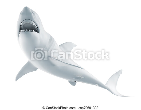 white shark - csp70601302