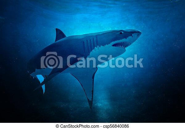 white shark - csp56840086