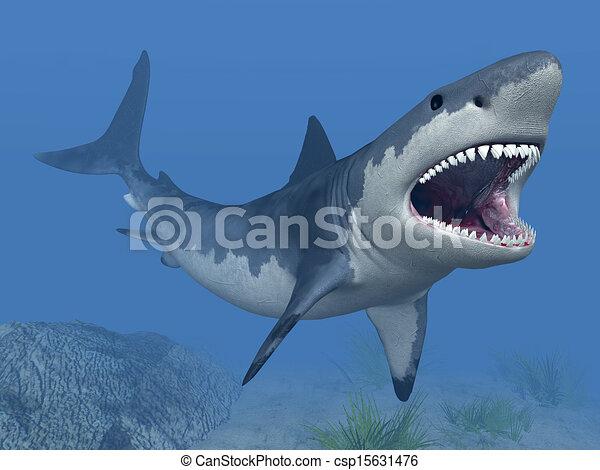 White Shark - csp15631476