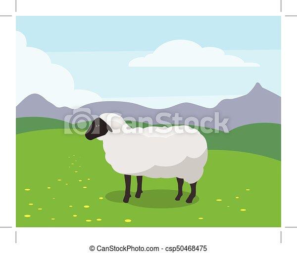 white sheep - csp50468475