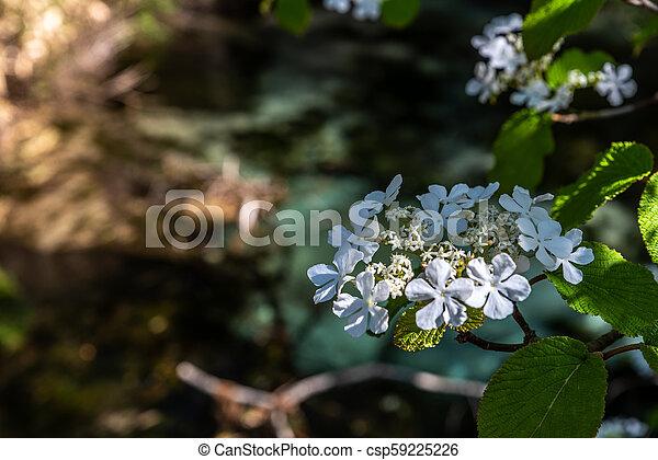White small flower - csp59225226