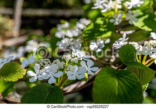 White small flower - csp59225227