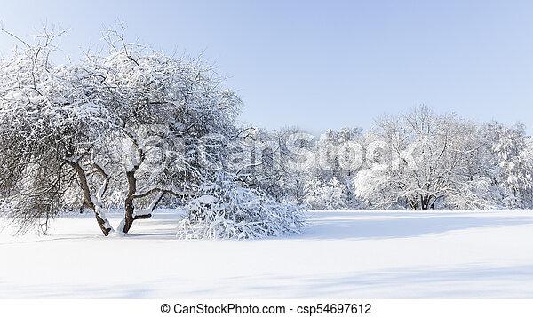 White snow in a winter park - csp54697612