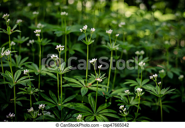 White spring flowers tiny white spring forest flowers with green white spring flowers csp47665042 mightylinksfo