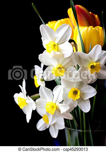 White springtime daffodil flower isolated on black background white springtime daffodil flower csp45293013 mightylinksfo