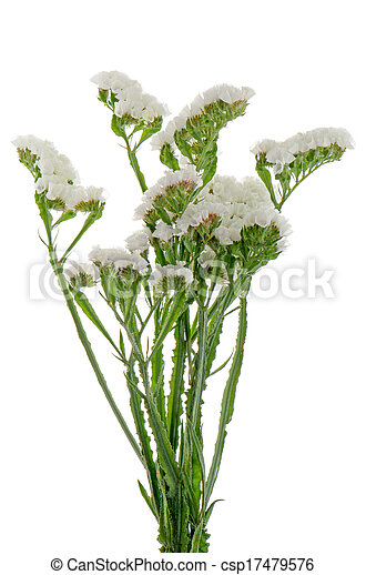 White statice flowers isolated on the white picture search photo white statice flowers csp17479576 mightylinksfo Images