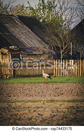 White stork on the field - csp74433175