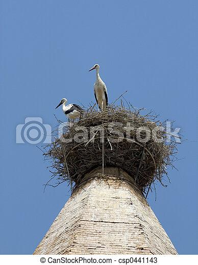 White storks in Huesca, Spain - csp0441143