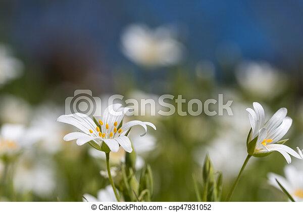 White summer flowers closeup white summer flowers stock images white summer flowers closeup csp47931052 mightylinksfo
