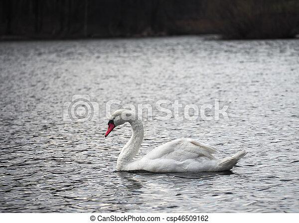 White swan at lake top view - csp46509162