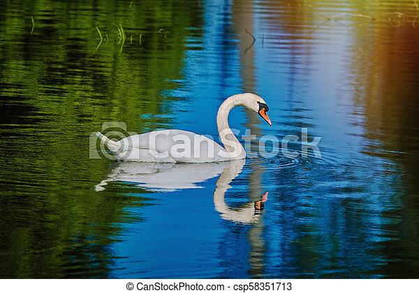 White Swan at the Lake - csp58351713