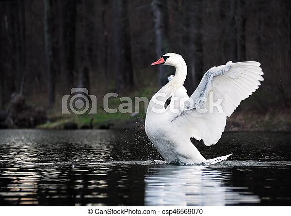 White swan landing at the lake - csp46569070