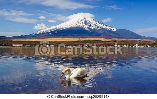 White Swan with Mount Fuji at Yamanaka lake, Yamanashi, Japan - csp28298147