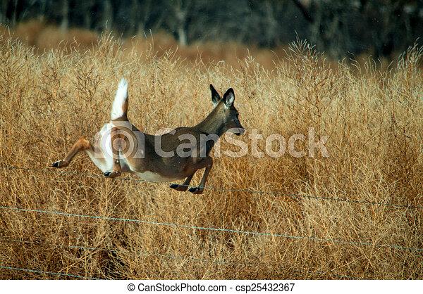 White Tail Deer - csp25432367