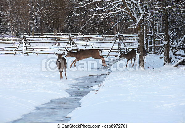 White-tailed deer jumping ditch - csp8972701