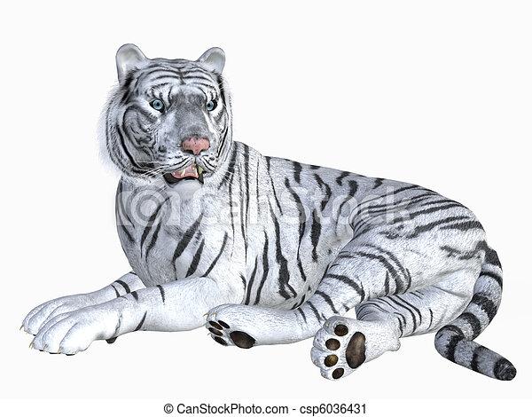 white tiger rh canstockphoto com White Tiger Face White Tiger Face