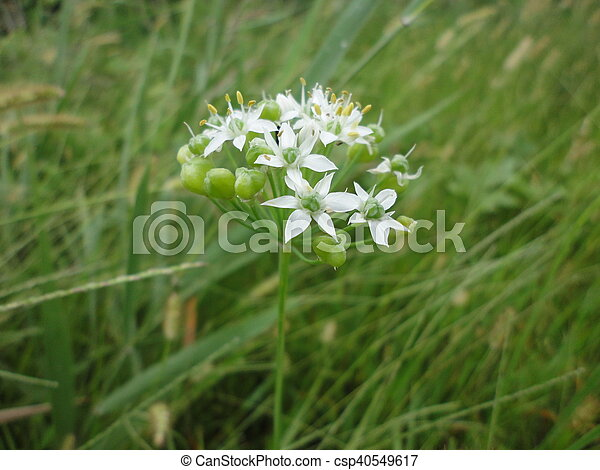 White tiny flowers autumn in japan mightylinksfo
