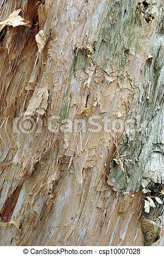 white tree bark texture - csp10007028