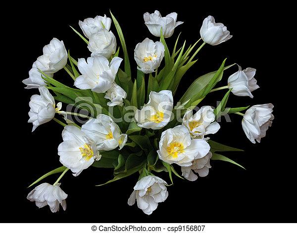White tulips on black - csp9156807