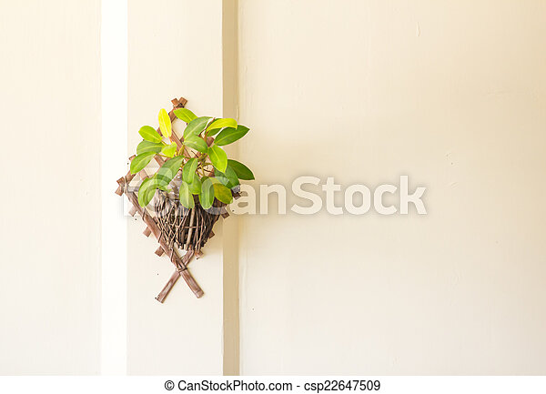 white wall and green plant in pot - csp22647509