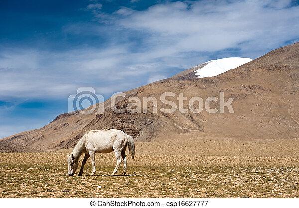 White wild horse at Himalaya mountains. India - csp16627777