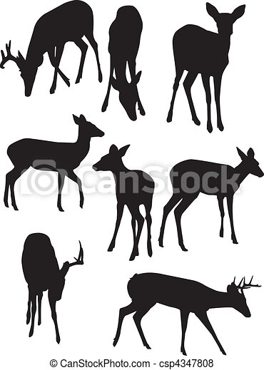 Whitetail Deer Silhouettes - csp4347808