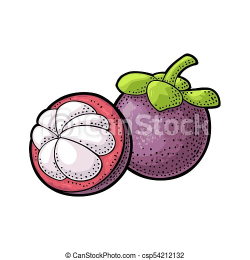 Whole And Half Mangosteen Vector Vintage Engraving Whole And Half