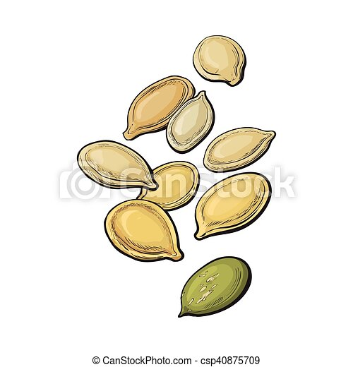 Whole and peeled pumpkin seeds isolated on white background - csp40875709