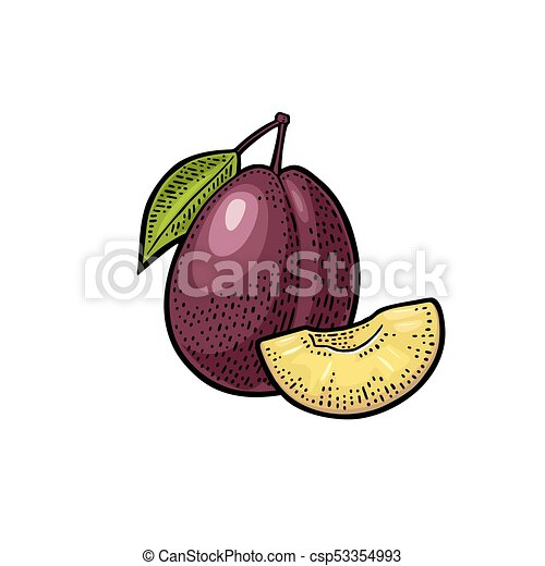 Whole and slice plum with seed and leaf. Vector vintage engraving - csp53354993