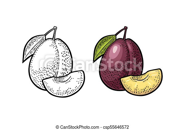 Whole and slice plum with seed and leaf. Vector vintage engraving - csp55646572