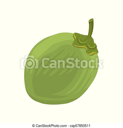 Whole Young Green Coconut Flat Vector Icon Of Tropical Fruit