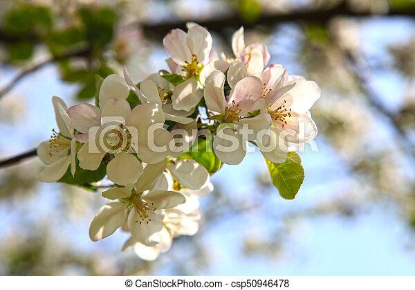 kwiaty wiśni z 1974 roku slogany profilu randkowego