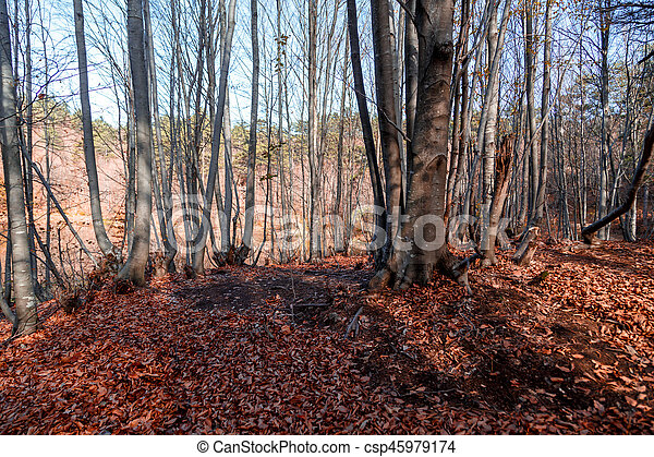 Wide View of Autumn Trees - csp45979174