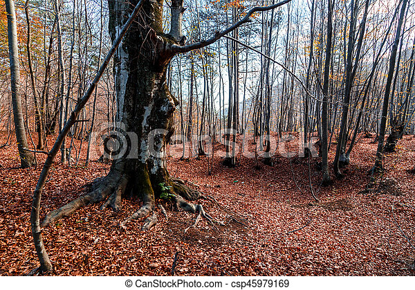 Wide View of Autumn Trees - csp45979169