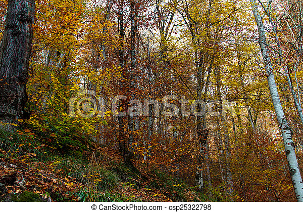 Wide View of Autumn Trees - csp25322798