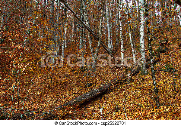 Wide View of Autumn Trees - csp25322701