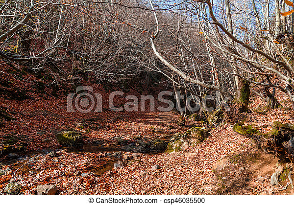 Wide View of Autumn Trees - csp46035500
