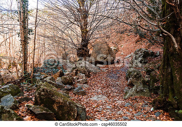 Wide View of Autumn Trees - csp46035502