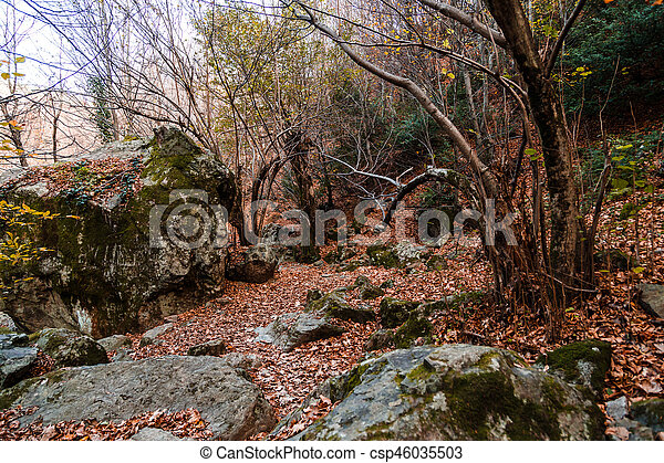 Wide View of Autumn Trees - csp46035503
