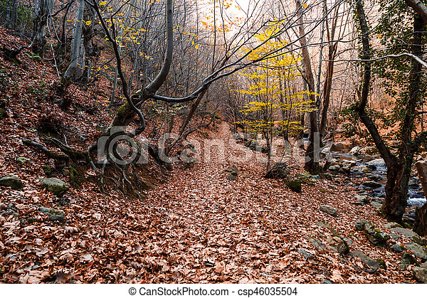 Wide View of Autumn Trees - csp46035504