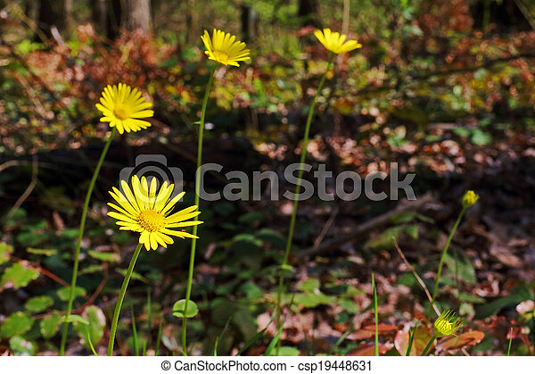 Wild And Yellow Daisy In The Forest - csp19448631