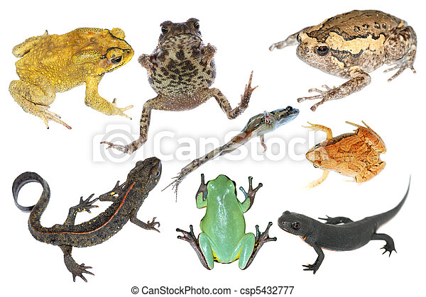 wild animal collection amphibian - csp5432777