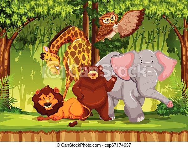 Wild animal in the jungle - csp67174637