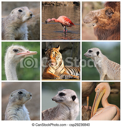 Wild Animals Collage Of Various Kinds