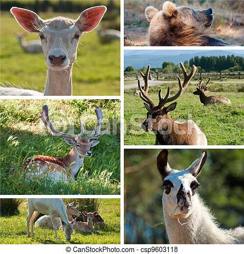 Wild Animals Zoo Collage
