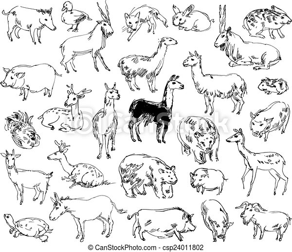 Wild Animals. Zoo. Set. Hand-drawn - csp24011802